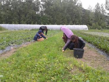 Mission métier de maraîcher : la récolte