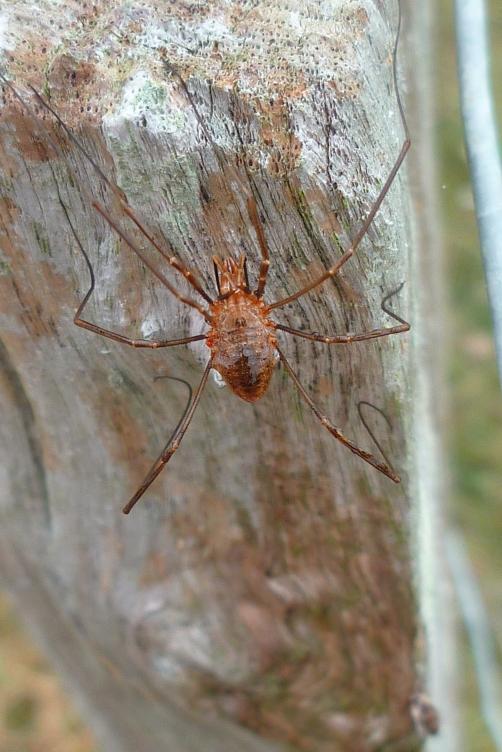 Combien de pattes ? Combien de partie du corps ? Insecte ou arachnide ?