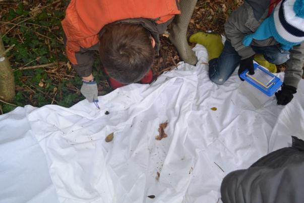 La technique du drap blanc, on secoue la branche et hop !