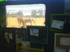 Les chevaux soutiennent le moral pendant le montage !
