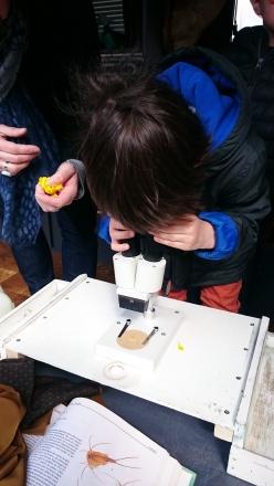 La loupe binoculaire permet de découvrir un nouveau monde !